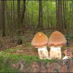 грибы в Гомеле