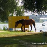лошадь выходит из раздевалки
