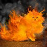 кот в огне