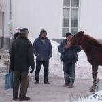 лошадка на Катунина в Гомеле