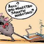 мышь в шоке