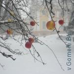 яблоки на дереве в зимнем гомельском парке