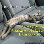 главное ехать котом