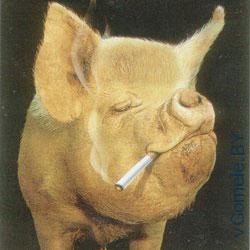 свинтус курит