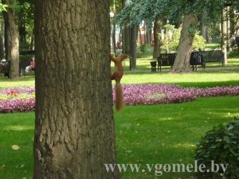 Белка в парке